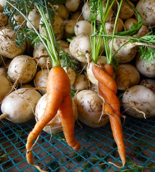 Bluegrass Farm Carrots